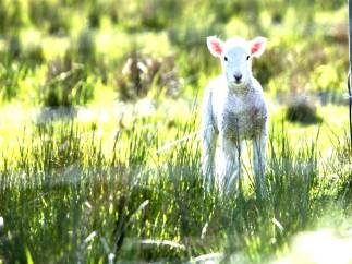 lamb.blog