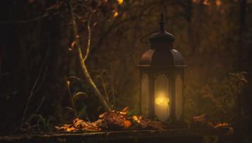 lanterninforestforwebsite